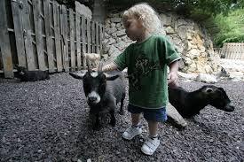 fair animals download child