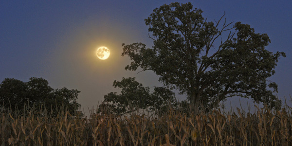 Full-corn-moon image